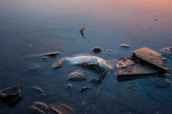 Long exposure of dead fish on lake in Asia