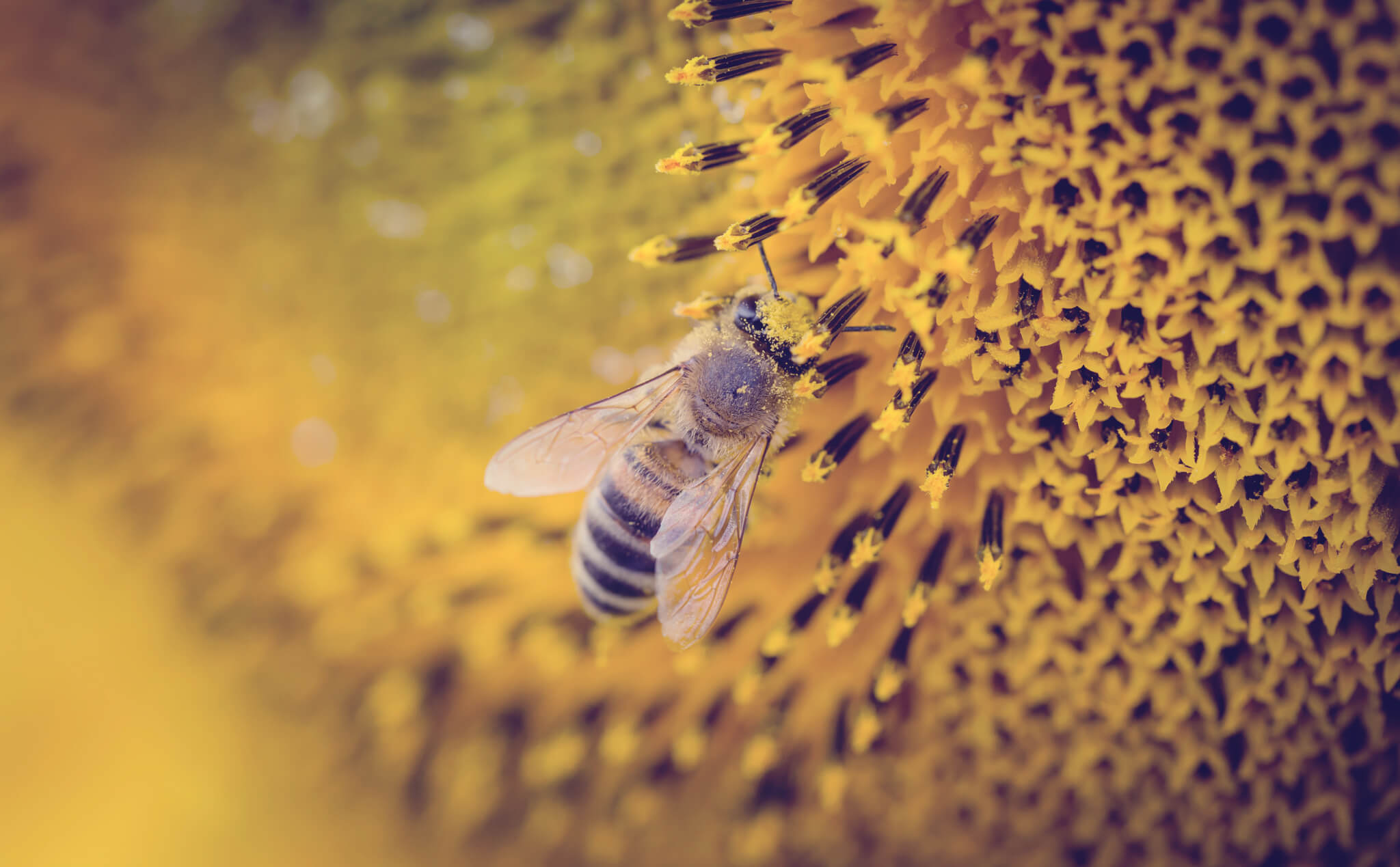 Bee pollinating flower, balance of ecology